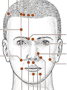 Facial Acupressure Points  #facial #accupressure #beneficial #health #pressure