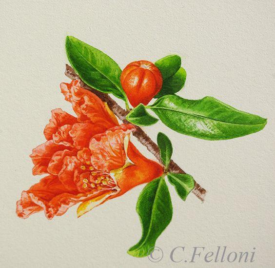 Il s'agit de Punica granatum Legrelliae, cultivar très répandu pour l'ornement aux fleurs plus fournies en pétales