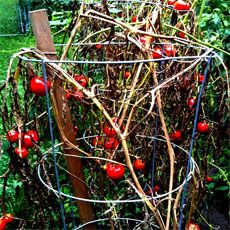 Cleaning The Garden In Autumn – Getting Your Garden Ready For Winter-garden know how