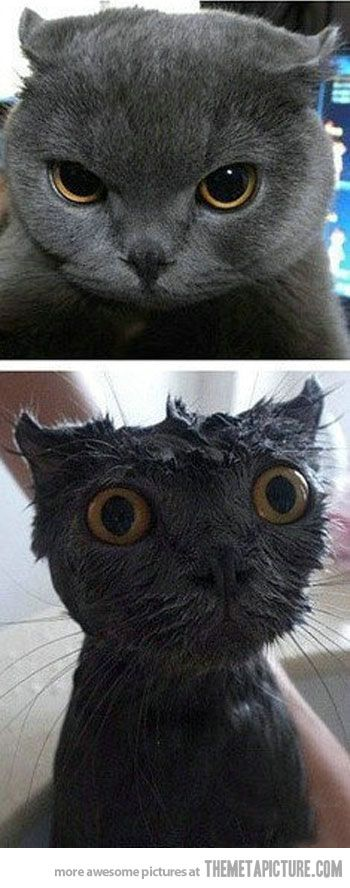 A bath can traumatize even the coolest cat...