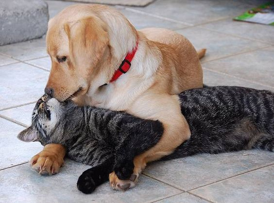 Every cat should have a dog.