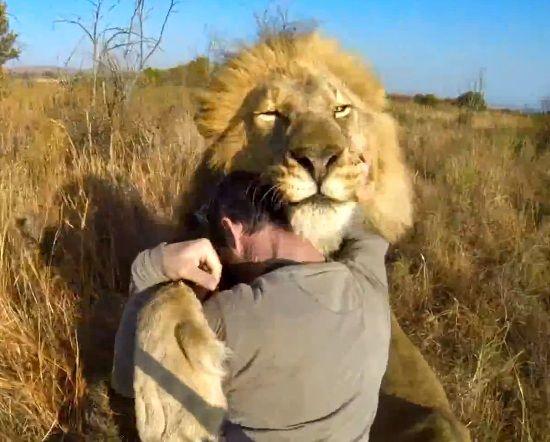man hug the lion and lion on pinterest. Black Bedroom Furniture Sets. Home Design Ideas