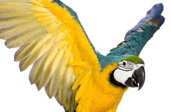 understand your birds body language