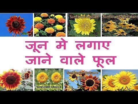 ज न June म लग ए ज न व ल फ ल Flowers To Grow In June Youtube In 2020 Plant Hacks Flower Seeds Buy Seeds