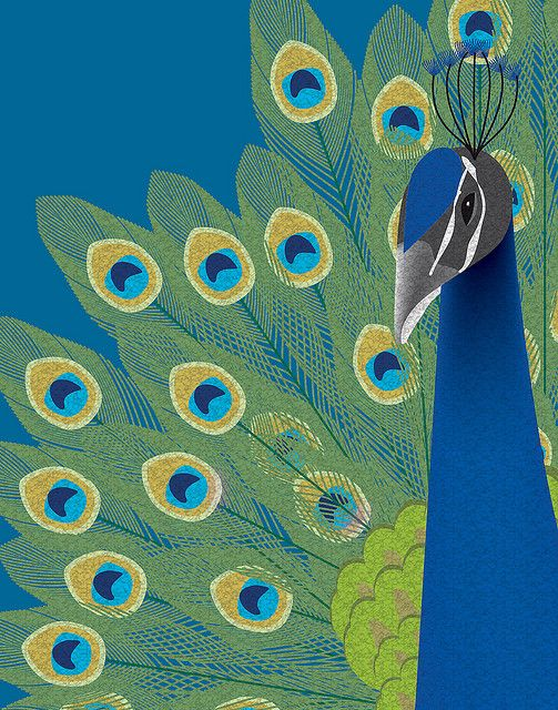 Peacock by Leanne Phillips, via Flickr: