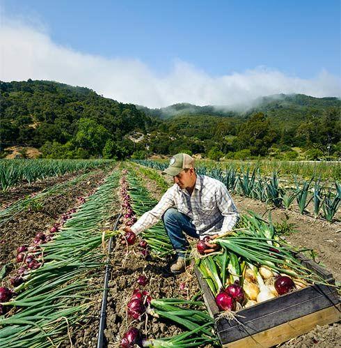 Avila Valley Barn | San Luis Obispo, CA | About Page