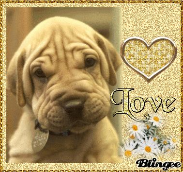 blingee puppy love | my dog love palavras chave dog love my