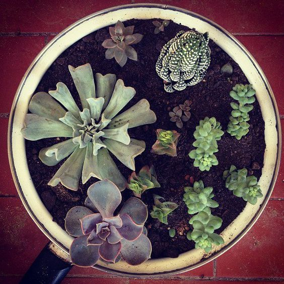 My beautiful succulents. From Brazil to the pinterest world LOL