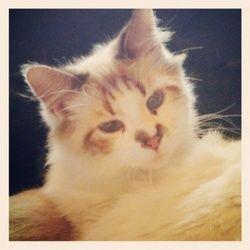Cat Adoption Macon Ga