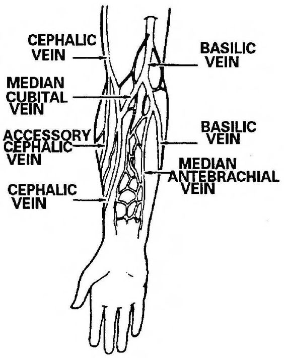 venipuncture order of draw | procedure for obtaining a blood, Cephalic Vein