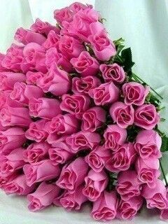 Pink roses #ValentinesDay