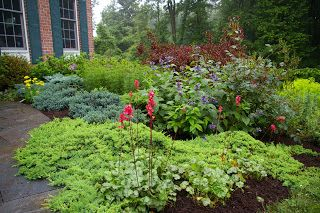 A beautiful mixed foundation planting with dwarf for Easy care garden shrubs