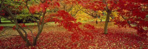 Westonburt Gloucestershire England Lámina fotográfica