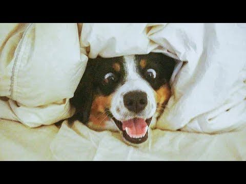 Funniest Dogs And Cats Awesome And Funniest Animals