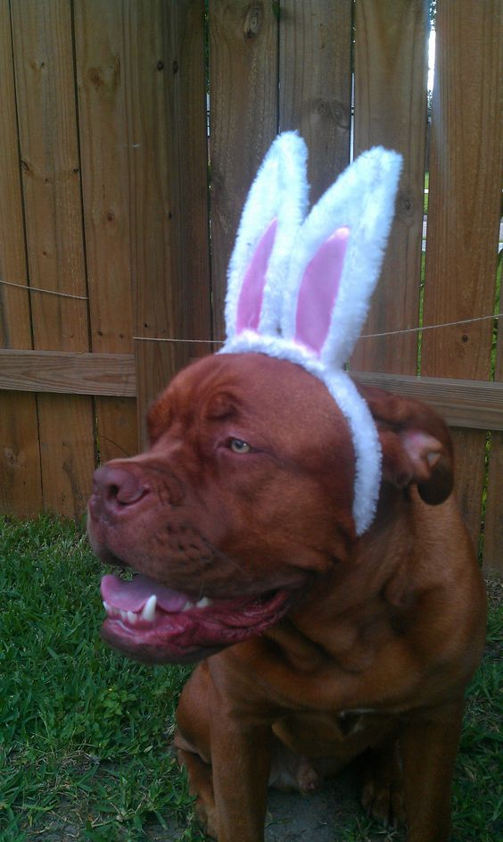 Feliz Páscoa meus amigos!