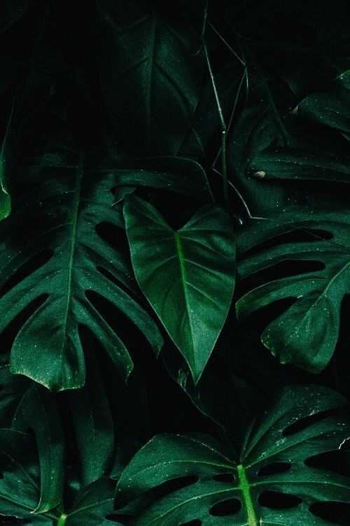 Low Light Phone Wallpaper Images Nature Inspiration Green Aesthetic Low light hd wallpaper download