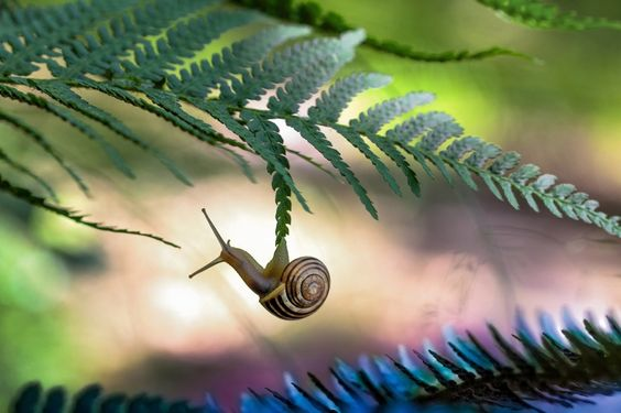 Snail hanging from a fern.