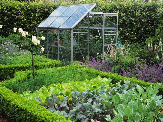 Low Box Hedging Creates Edge for Salad Crop