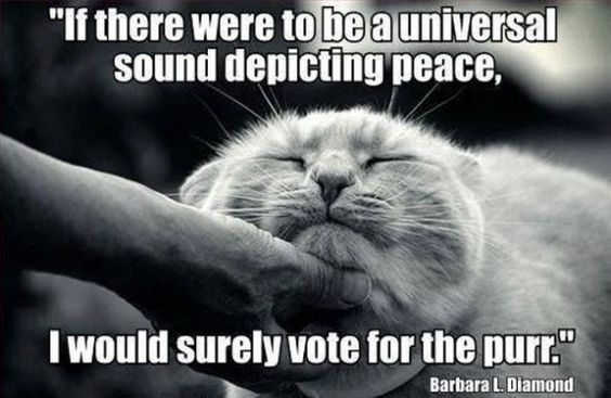 """If there were to be a universal sound depicting peace, I would surely vote for the purr-re."":"