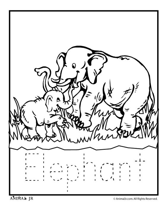 zoo animal coloring pages zoo babies zoo babies elephant classroom jr kids zoo printables. Black Bedroom Furniture Sets. Home Design Ideas