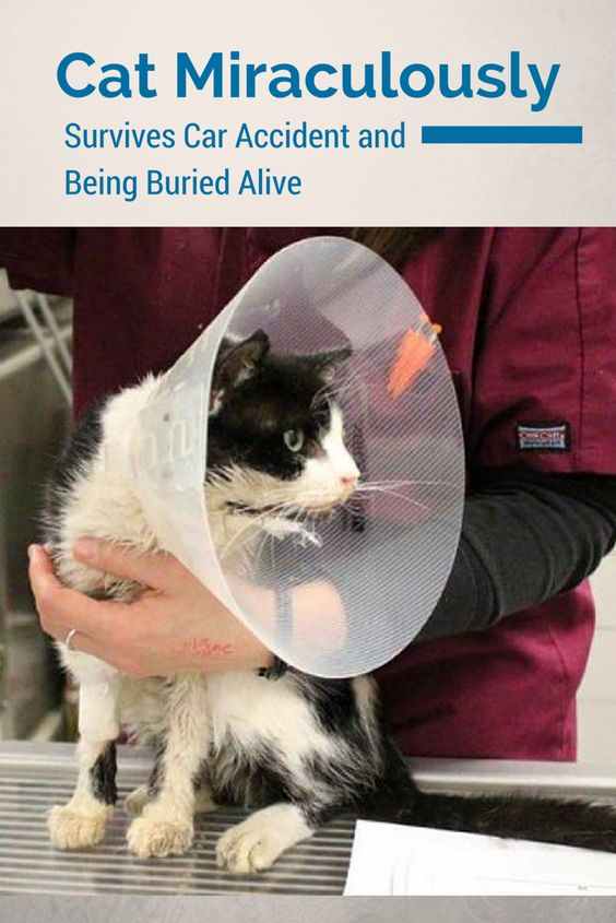 This is living proof that cats have nine lives... This cat was buried in the backyard after he suffered from an accident and appeared to be dead.. What happens next WILL shock you!