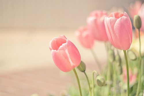 Cute Tumblr Photography Flowers