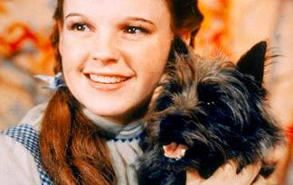 *DOROTHY (Judy Garland) and Toto ~ Wizard of Oz