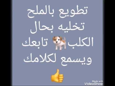تطويع بالملح تخليه بحال الكلب تابعك ويسمع لكلامك Youtube Islam Islam Quran Crochet Videos
