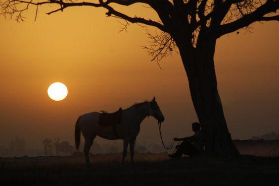 Marwari horses...