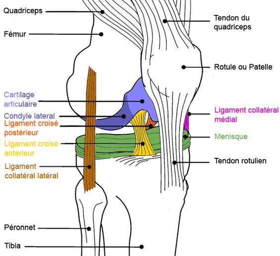 Arthrose au genou http://monblog75.blogspot.fr/2012/04/infos-sante-kine-osteo-mal-de-dos-et.html