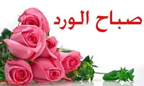 صور مكتوب عليها عبارات صباح الورد حالات صباح الخير Flowers Special Flowers Affordable Flowers