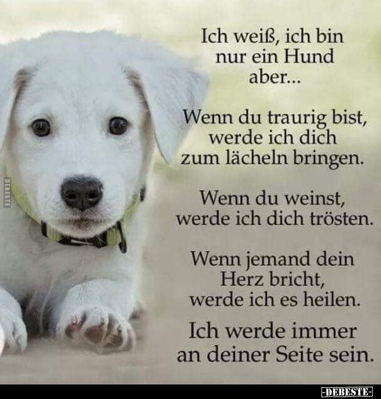 Ich Weiss Ich Bin Nur Ein Hund Aber Lustige Bilder Spruche Witze Echt Lustig Hund Witze Lustige Tierzitate Hund Zitat