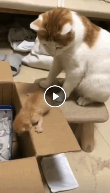 Gato dando um pequeno incentivo para seu filhote