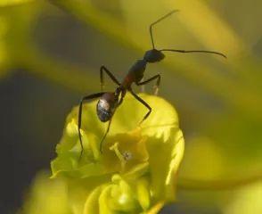 Ameisen in Blumenbeeten oder Blumentöpfen vertreibt man mit Zitronenscheiben oder Zitronenschalen.