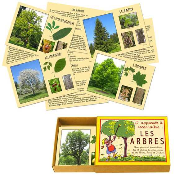 Achetez sur internet notre Reconnaître les arbres