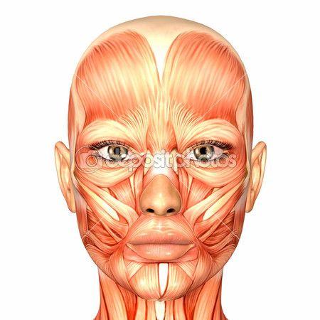 Anatomia de rosto humano feminino — Imagem Stock #9162283