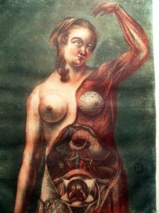 [ Jacques Fabian Gautier d'Agoty - artistic Anatomy Illustrations ]
