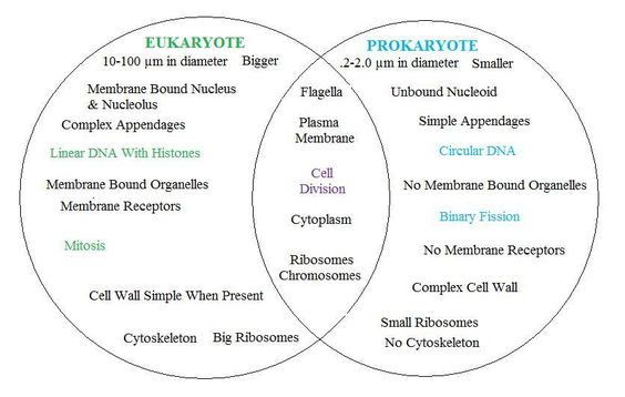 prokaryotes vs eukaryotes worksheet worksheets kristawiltbank free printable worksheets and. Black Bedroom Furniture Sets. Home Design Ideas