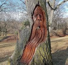 Image result for trees with faces game of thrones