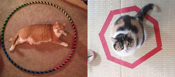 Cat Circle : le mystérieux phénomène qui fait s'assoir votre chat à coup sur
