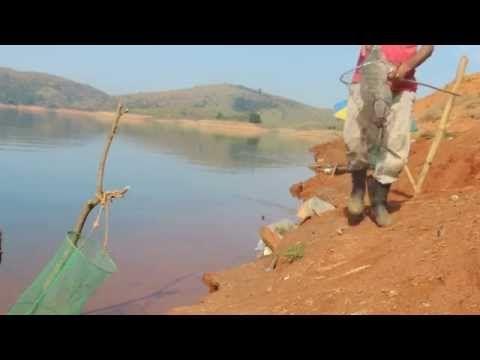 Pescaria de tilapias Grandes - YouTube