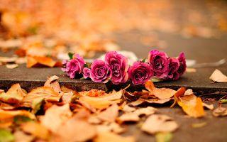 Você faz a Diferença: Seja flor por onde for...
