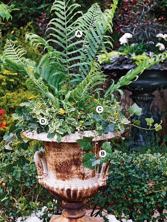 Great containers for gardening gardens planters and ferns - Container gardens for shade ...