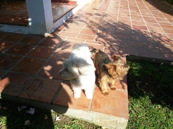 Ratos en casa  Milo,Chico 10/16