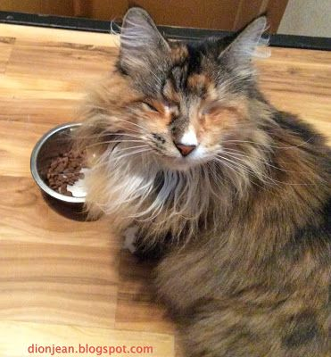 I interrupted Lucy the blind cat while she was eating. She doesn't look very happy with me, huh?