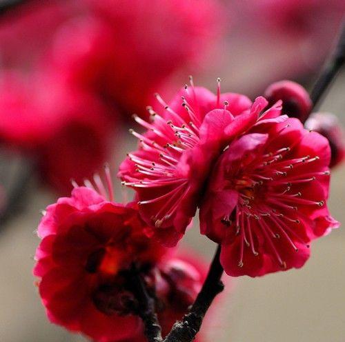 Spring Passion