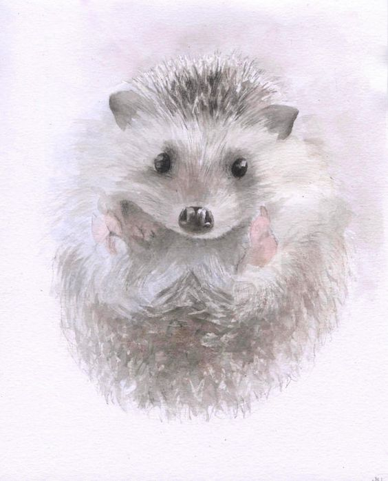 Baby hedgehogs, Hedgehogs and Watercolors on Pinterest