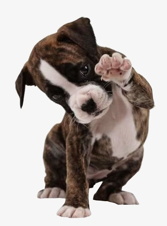 Hello Puppy Gray Lovely Animal Png Transparent Clipart Image