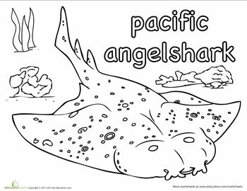 Pacific Angel Shark Habitat