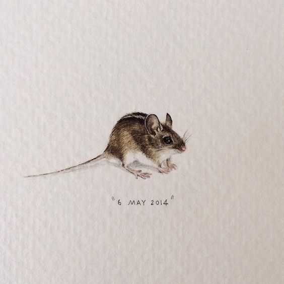 Day 156 : Four-striped field mouse | Rhabdomys Pumilio. 32 x 13 mm. #365postcardsforants #miniature #watercolour #wdc624 #fieldmouse #mouse #capetown  (at Red Sofa Cafe)